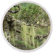 Lichens On Tree Branches In The Scottish Highlands Round Beach Towel