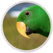 Light Of Love - Eclectus Parrot Round Beach Towel