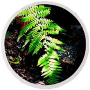 Light Play On Fern Round Beach Towel
