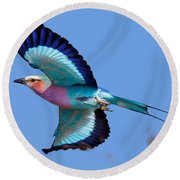 Lilac-breasted Roller In Flight Round Beach Towel