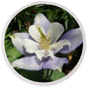 Lilac Columbine Round Beach Towel