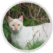 Lilac Point Siamese Cat Round Beach Towel