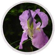 Lilac Siberian Iris Round Beach Towel