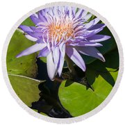Lilac Water Lily Round Beach Towel