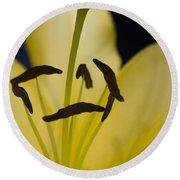 Lilium In Yellow Round Beach Towel