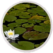 Lily And Pads Round Beach Towel