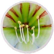 Lily -lilium Round Beach Towel