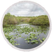 Lily Pads Floating On Water, Anhinga Round Beach Towel