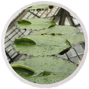 Lily Pads With Reflection Of Conservatory Roof Round Beach Towel