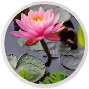 Lily Pink Round Beach Towel