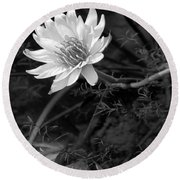 Lily Reflection Round Beach Towel