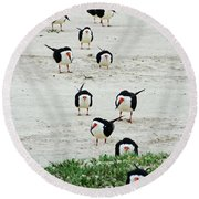 Line Up Black Skimmers  Round Beach Towel