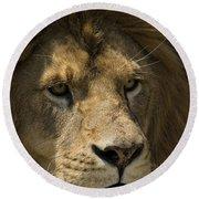 Lion-animals-image Round Beach Towel