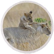 Lion Cub Playing With Female Lion Round Beach Towel