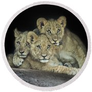 Three Lion Cubs Round Beach Towel
