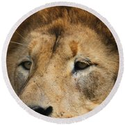 Lion Eyes Round Beach Towel