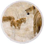 Lion Family Round Beach Towel
