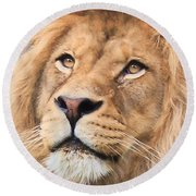 Lion In Deep Thought Round Beach Towel