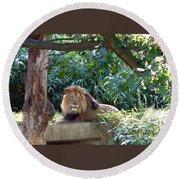 Lion King At Washington Zoo Round Beach Towel