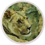 Lion Looking Back Round Beach Towel