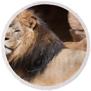 Lion Portrait Of The King Of Beasts Round Beach Towel