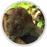 Lioness-00104 Round Beach Towel