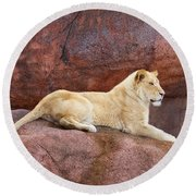 Lioness On A Red Rock Round Beach Towel