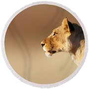 Lioness Portrait Round Beach Towel