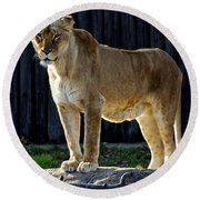 Lioness Round Beach Towel by Frozen in Time Fine Art Photography
