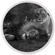 Lions Me And My Guy Round Beach Towel