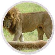 Lions On The Masai Mara Round Beach Towel
