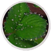Liquid Pearls On Strawberry Leaves Round Beach Towel