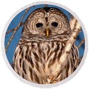 Lit Up Owl Round Beach Towel