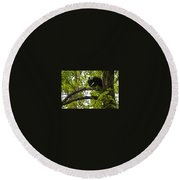 Little Bear Cub In Tree Cades Cove Round Beach Towel