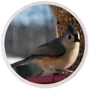 Little Gray Crested Titmouse Bird Ready For Lunch Round Beach Towel