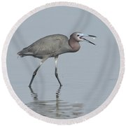Little Blue Heron With Fish Round Beach Towel