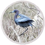 Little Blue In Rookery Louisiana Round Beach Towel