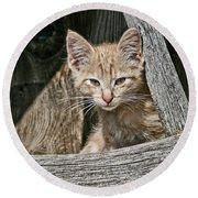 Little Charlie - Kitten By Wagon Wheel - Casper Wyoming Round Beach Towel