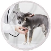 Little Dog At The Vet Round Beach Towel