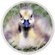 Little Duckling Round Beach Towel