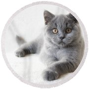 little Friend Round Beach Towel