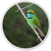 Little Green Bee-eater  Merops Orientalis Round Beach Towel
