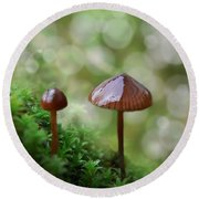 Little Mushroom Reflections Round Beach Towel