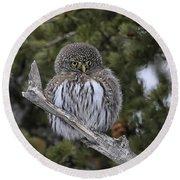 Little One - Northern Pygmy Owl Round Beach Towel