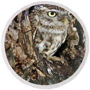 Little Owl In Hollow Tree Round Beach Towel