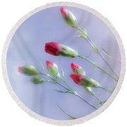 Little Red Carnations In The Sun Round Beach Towel