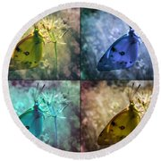 Lives Of A Butterfly Round Beach Towel