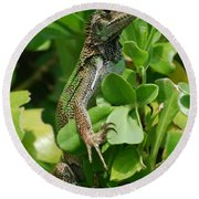 Lizard In Hedge Round Beach Towel