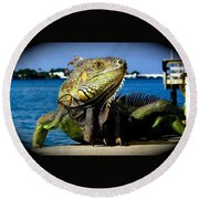 Lizard Sunbathing In Miami Round Beach Towel