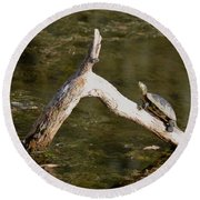 Log Climbing Turtle Round Beach Towel